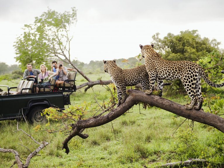DINOKENG BIG 5 SAFARI HALF DAY TOUR