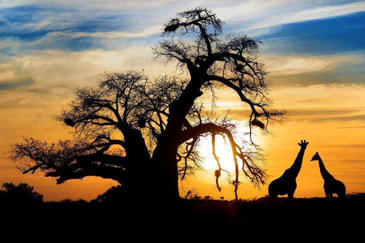 south africa destination guide gullivers sports travel