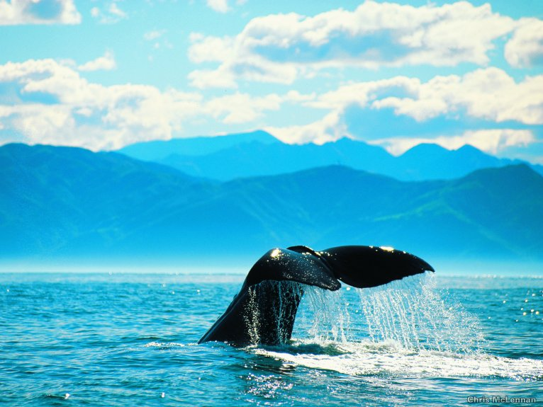 WHALE WATCHING BOAT CRUISE KNYSNA HALF DAY TOUR