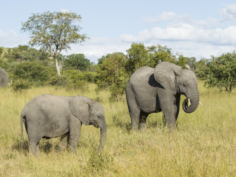 Kruger National Park – Full Day Trip 13 July