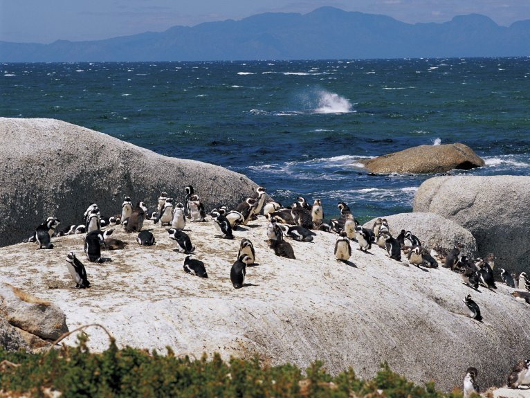 WHALE DOLPHIN AND PENGUIN ISLAND CRUISE HALF DAY TOUR 8 JULY